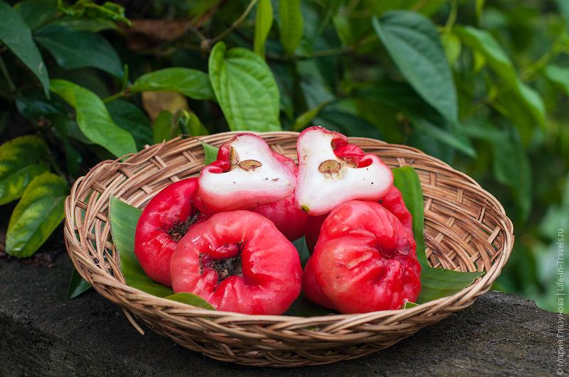 Чомпу (Chomphu), оно же Малайское яблоко, восковое, розовое, горное или водяное яблоком, Джамболан или Ямбоза