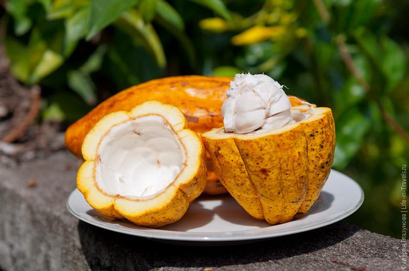 Какао (Cacao)