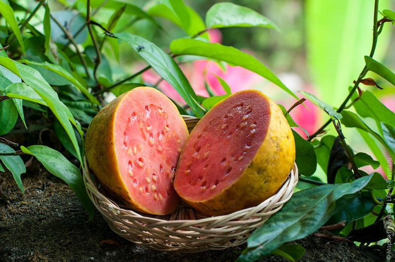 Гуава (Guava) или Гуайява