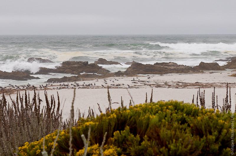 Скудная растительность на побережье