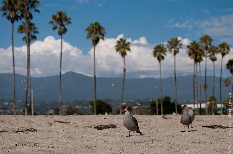 Птицы на берегу