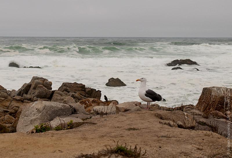 Чайки на берегу