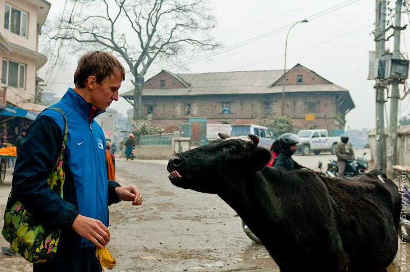 Кормление коровы.jpg