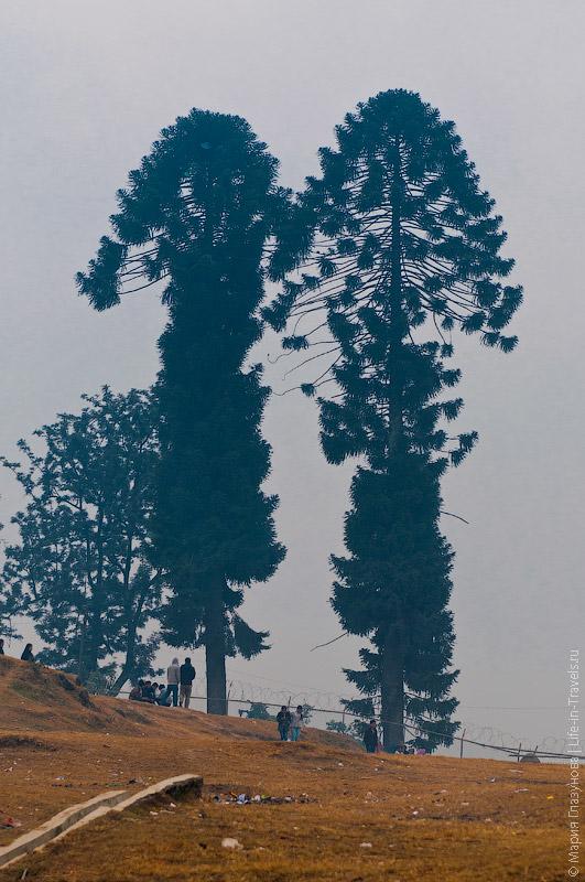 Растительность в Непале