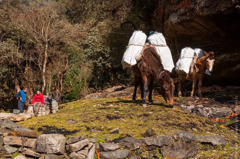 Привал в Гималаях