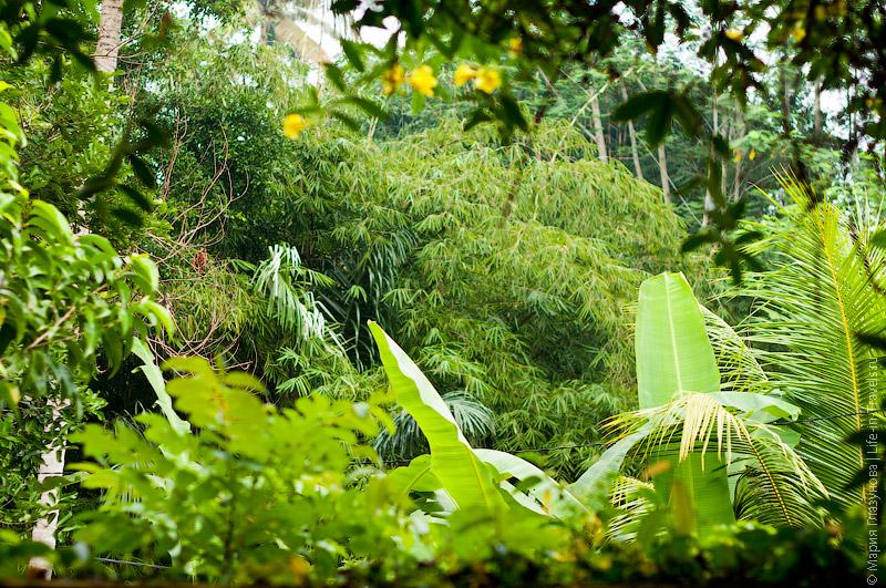 Растительность на Бали