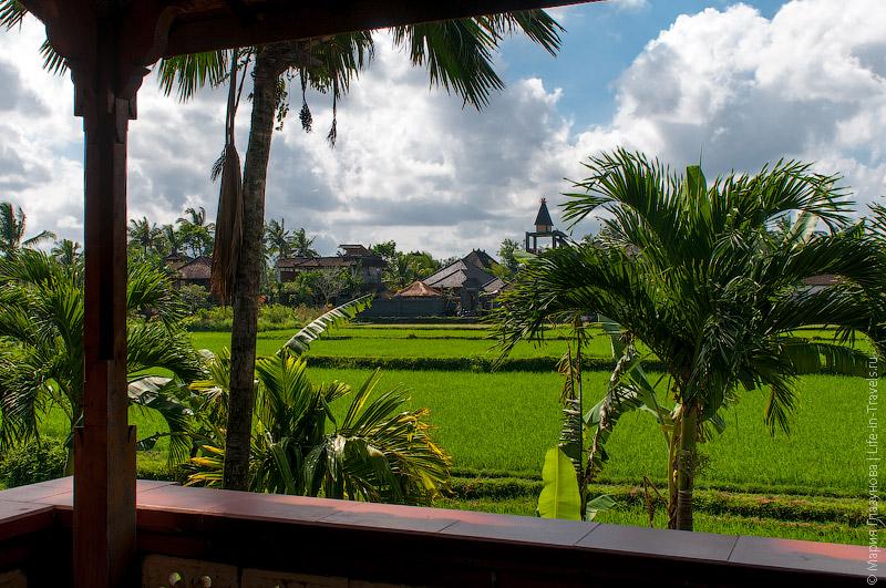 Вид на рисовые поля с террасы