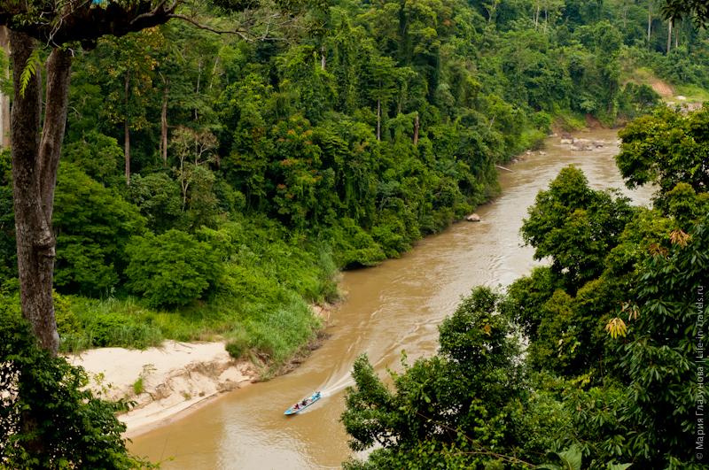 Вид на лес и реку