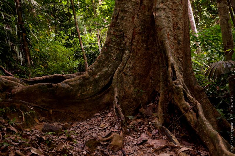 Тысячелетнее дерево
