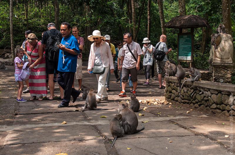Туристы и обезьяны