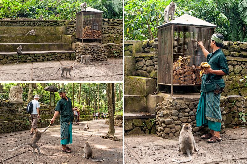 Кормёжка обезьян