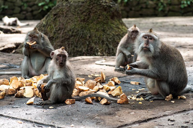 Завтрак у обезьян
