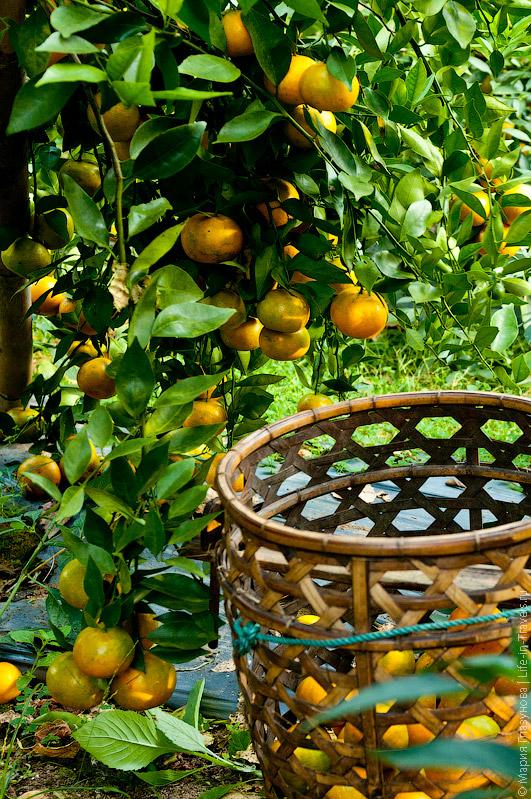 Корзина для мандаринов