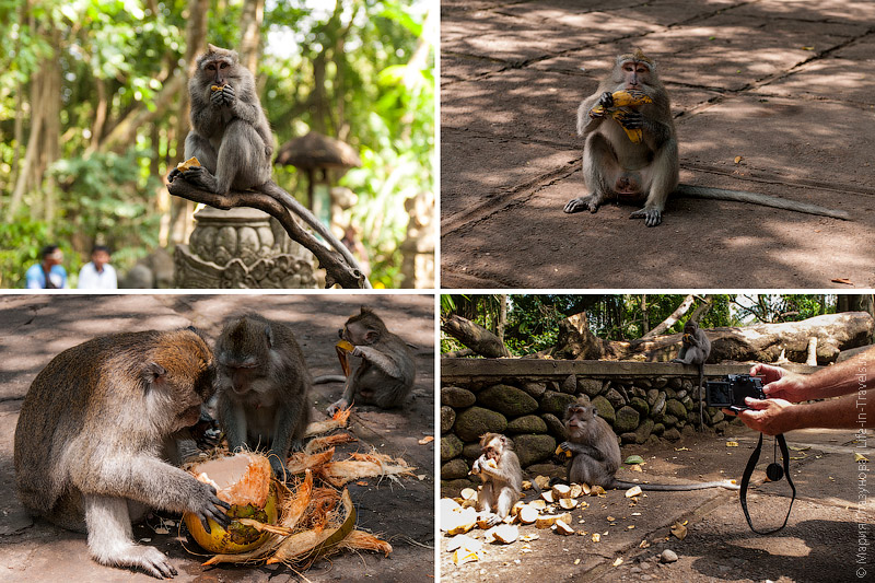 Приём еды у обезьян