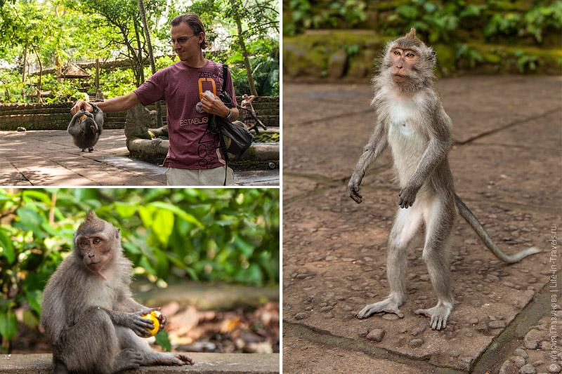 Кормим обезьяну