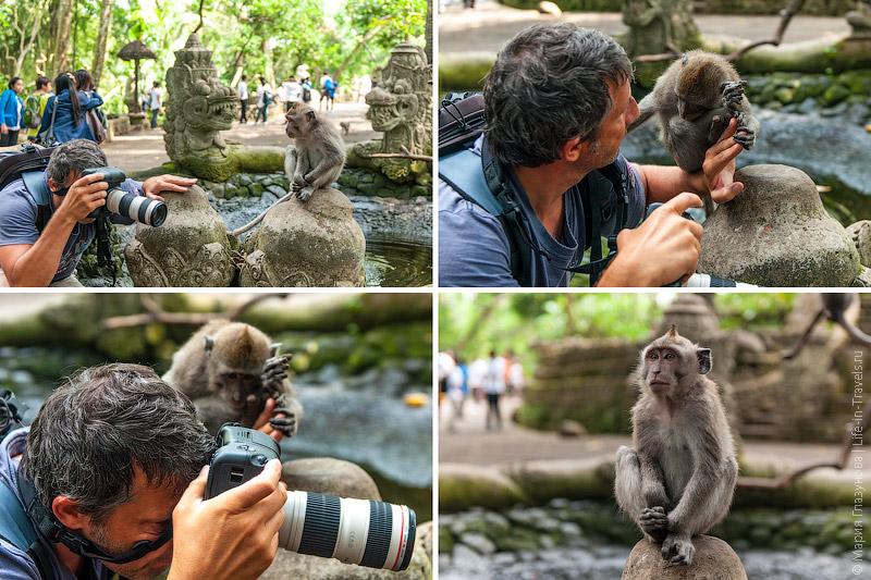 Фотограф и обезьяна