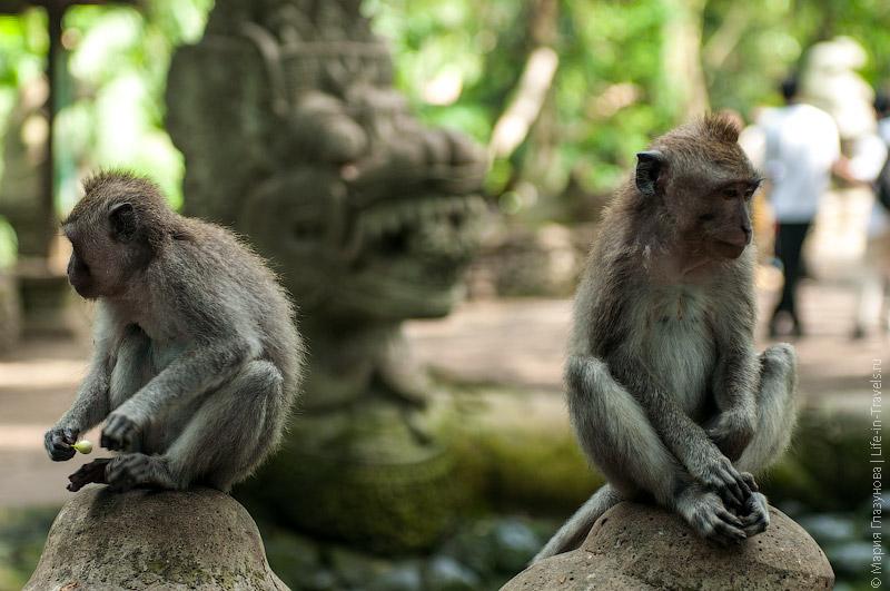 Скучающие обезьяны