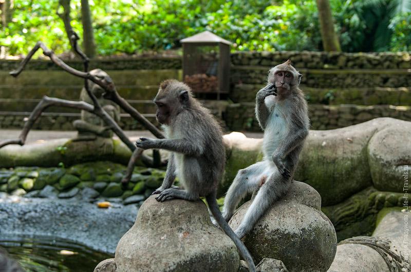 Задумчивые обезьяны