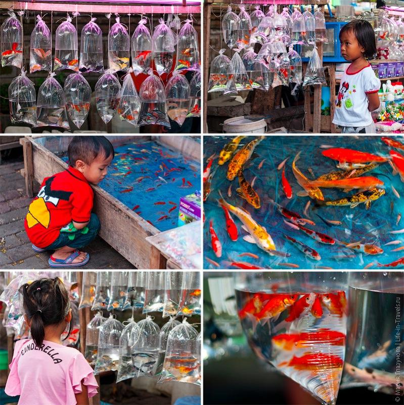 Дети и рыбки