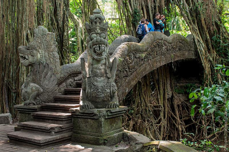 Оригинальный мост в лесу обезьян