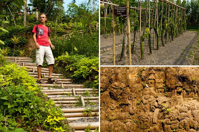 Экскурсия по плантации