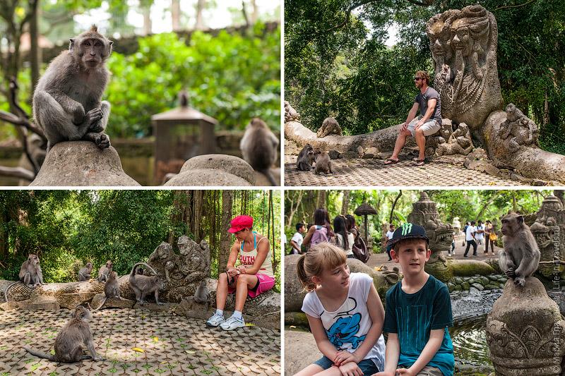 Фото с обезьянкой на память