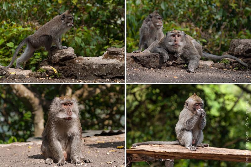 Обезьяны на Бали