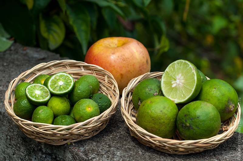 Азиатские лимоны (lemon)