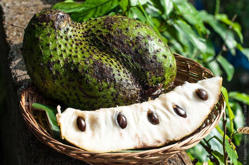 Сирсак (Sirsak), Гуанабана или Аннона колючая, сметанное яблоко