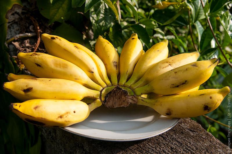 Бананы (Banana)