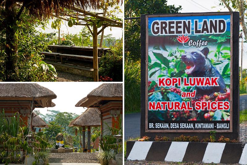 Вывеска Kopi Luwak