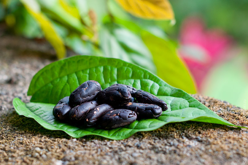 Очищенные какао-бобы