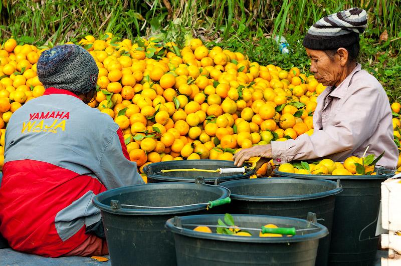 Сортировка мандаринов