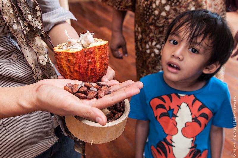 Этапы производства какао