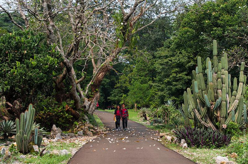 Богор - ботанический сад