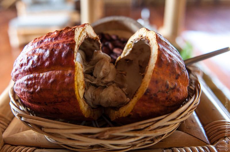Свежий какао-плод