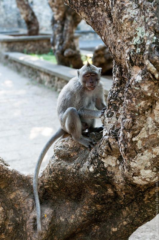 Довольная обезьяна