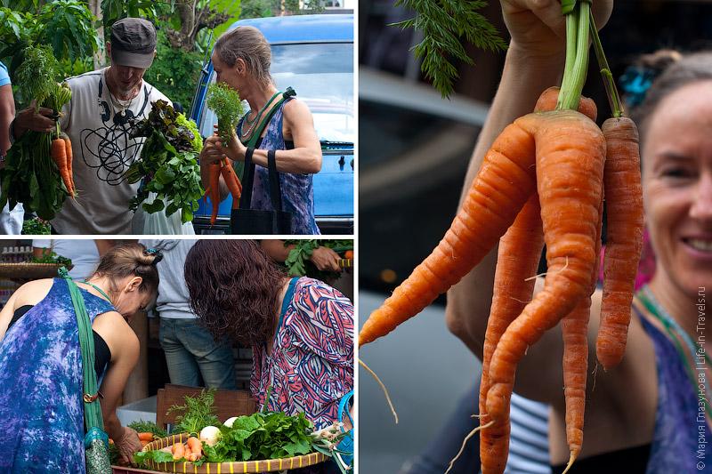 Выбор моркови