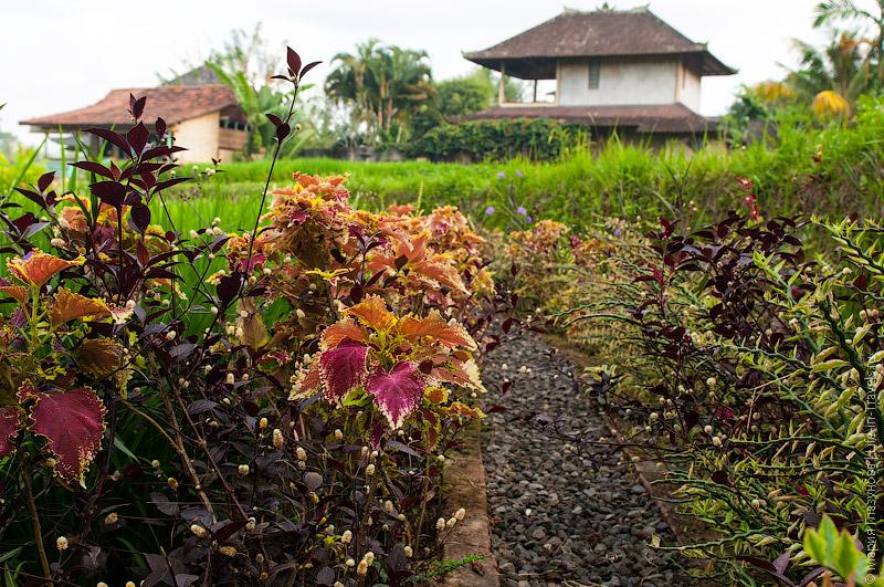 Цветущие тропинки