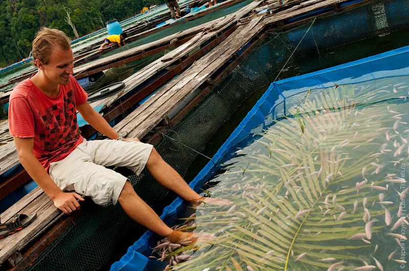 Рыбное СПА на ферме