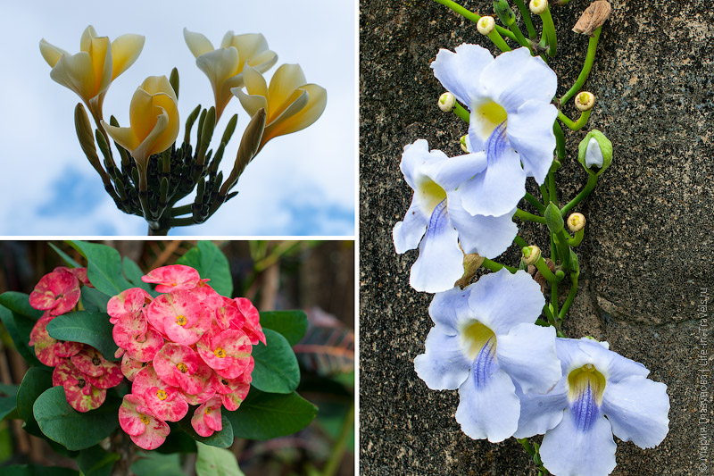 Кругом цветы