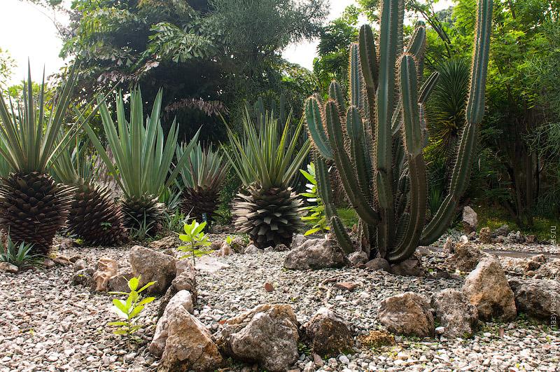 Ботанический сад в Богоре