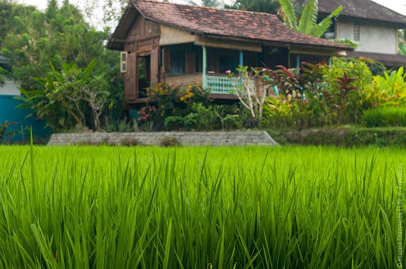 Балийские дома