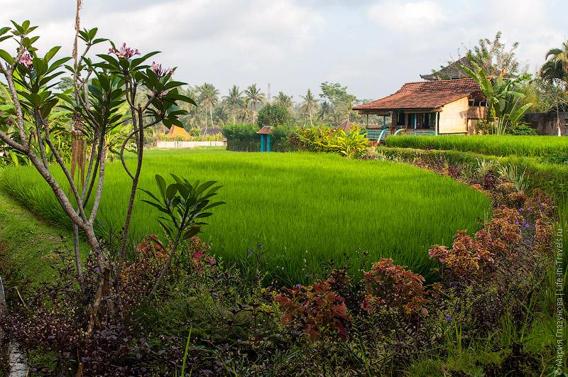 Балийские дома в рисовых полях