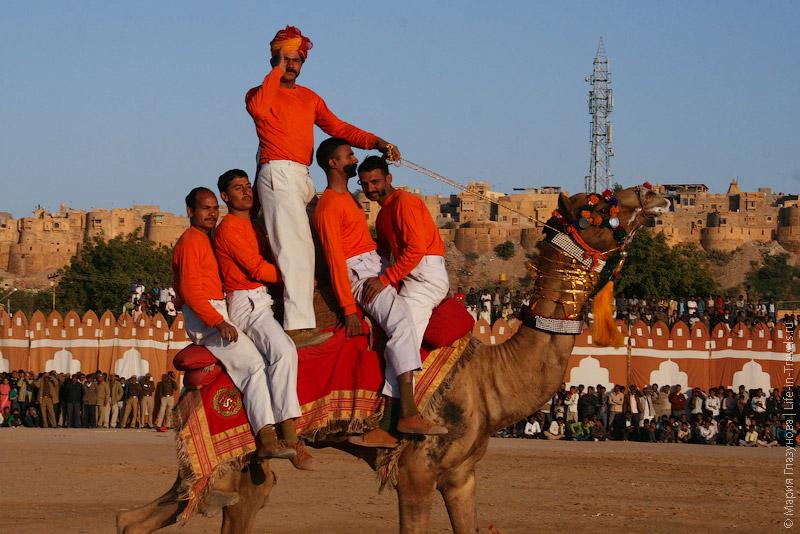 Гимнасты на верблюдах