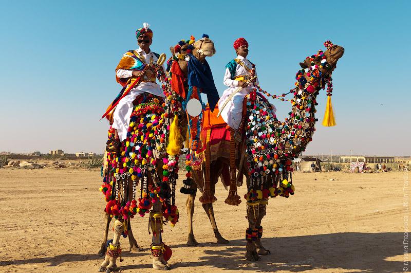 Шоу на верблюдах