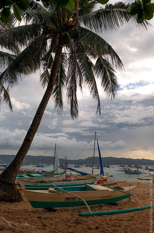 Пальмы на Белом пляже