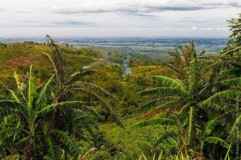 Банановые рощи на Филиппинах