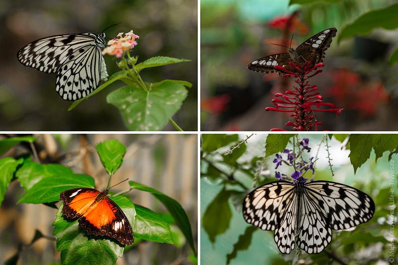 Бабоочки
