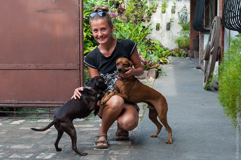 Домашние животные на филиппинах